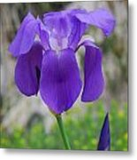 Wild Growing Iris Croatia Metal Print