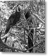 Wild Hawaiian Parrot Black And White Metal Print