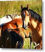 Wild Horse At Lunch Metal Print