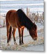 Wild Horse At Sunrise Metal Print