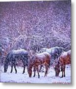 Wild Horse Christams Metal Print by Jeanne  Bencich-Nations