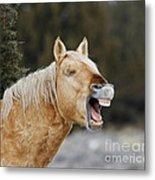 Wild Horse Chuckle Metal Print