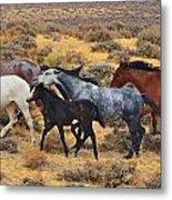 Wild Horse Family Metal Print