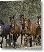 Wild Horse Herd Metal Print