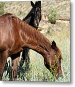 Wild Horse Mama And Her Baby Metal Print