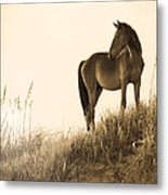 Wild Horse On The Beach Metal Print by Diane Diederich