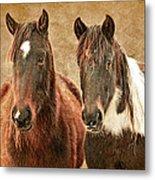 Wild Horse Pair Metal Print