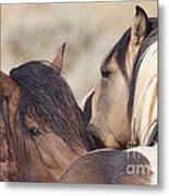 Wild Horse Secrets Metal Print