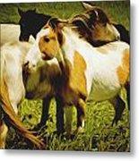 Wild Horses In California Series 14 Metal Print