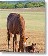 Wild Horses Mother And Baby Metal Print