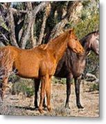 Wild Horses Of Joshua Tree Metal Print