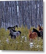 Wild Horses Of The Ghost Forest Metal Print