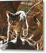 Wild Kitten Happy To Be Alive Metal Print
