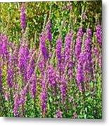 Wild Lavender Flowers Metal Print