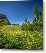 Wild Mountain Flowers Glacier National Park   Metal Print