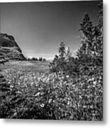 Wild Mountain Flowers Glacier National Park Metal Print
