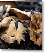 Wild Mushrooms On The Forest Floor - 5d21078 Metal Print by Wingsdomain Art and Photography