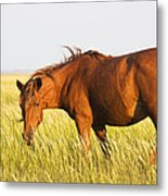 Wild Mustand On The Tidal Flats Metal Print by Bob Decker