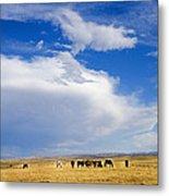 Wild Mustang Herd Grazing Metal Print