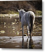 Wild Mustang On The River  Metal Print