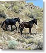 Wild Mustang Pair From Applewhite Hma Metal Print