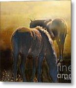Wild Mustangs In The Mist Metal Print