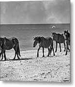 Wild Mustangs Of Shackleford Metal Print