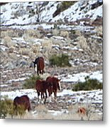 Wild Nevada Mustangs 2 Metal Print