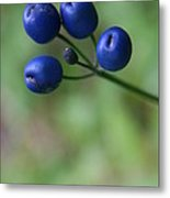 Wild New Hampshire Bluebead Lily Metal Print