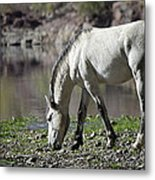 Wild On The River  Metal Print