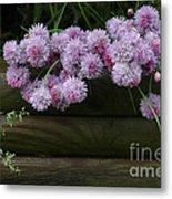 Wild Onion Flowers Metal Print