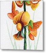 Wild Orchid Metal Print by Carolyn Weir