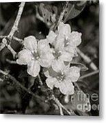 Wild Petunias In Black And White Metal Print