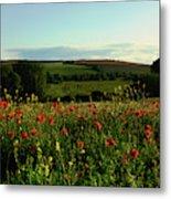 Wild Poppies Growing In A Field, Wylye Metal Print