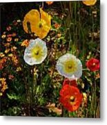 Wild Poppies Metal Print by Helen Carson