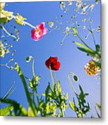 Wild Poppy Flowers Metal Print