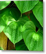 Wild Potato Vine Metal Print