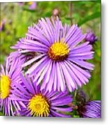 Wild Purple Asters Metal Print