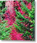 Wild Red Maple Metal Print