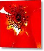 Wild  Red Rose Extrem Macro Metal Print