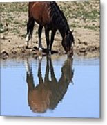 Wild Reflection Metal Print