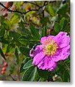 Wild Rose 3 Metal Print