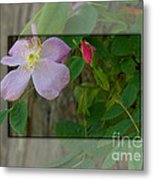 Wild Rose Out Of Bounds 1 Metal Print