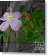 Wild Rose Out Of Bounds 2 Metal Print
