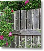 Wild Roses And Weathered Fence Metal Print