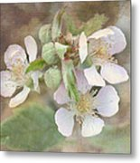 Wild Roses - Digital Paint Metal Print