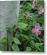 Wild Roses With Birch Tree Metal Print