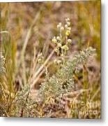 Wild Sage Wormwood Artemisia Figida Yellow Flower Metal Print