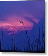 Wild Sky And Grasses Metal Print