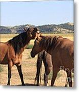 Wild Spanish Stallion In Charge Metal Print